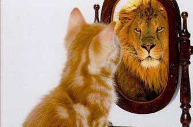 kitten-looking-in-mirror-seeing-a-lion_crop380w